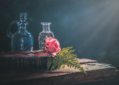 Sweet as a rose (Ro Cafe) Tags: rose flower bloom book bottles table wood dark black light romantic shabby ferm old vintage moody still life setup textured nikkormicro105f28 nikond600
