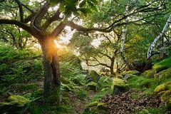 Summer light (J C Mills Photography) Tags: peakdistrict landscape trees oak moss ferns light green summer derbyshire