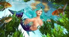 Sea Charm (Duchess Flux) Tags: mermaidcove thecove americanbazaar shanghai tableauvivant catwa glamaffair lepunk merlific velikarituals evermore musa bisou blackbantam anc secondlife mermaid sl