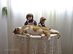 Momentos compartidos. (adioslunitaadios) Tags: chuli gato gatocomún mascota pelirrojo animal interior macro fujifilm