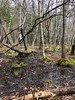 Pocomoke State Forest (Maryland DNR) Tags: pocomokestateforest summerfield stateforest tract trail