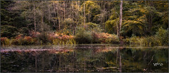 Wild Places. (Picture post.) Tags: landscape nature green water reflections trees paysage arbre eau