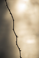 La ronce (Titole) Tags: ronce thorny titole nicolefaton bramble minimalism backlit frost