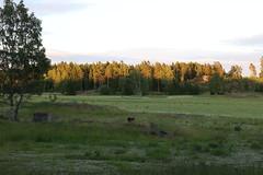 Oh deer! Too many a deer! (liisatuulia) Tags: porkkala deer valkohäntäpeura lauma peura