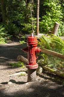 A random fire hydrant, in the forest (_K1_2656)