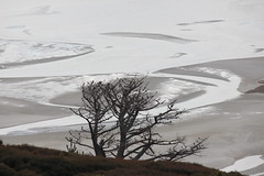 Bare kuckled tree, winter beauty (Snorkle-suz) Tags: newlens 55250mm tree silhouette sand lowtide winter holiday newzealand nz aotearoa canoneos600d canoneosrebelt3i canoneoskissx5 canonefs55250mmf456isstm barebranches