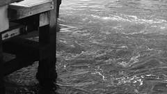 DSC06957 (A Common Courtesy) Tags: a common courtesy wellington auckland new zealand camera photo bw color black white day night monochrome bokeh sony nex 5a nex5a focuspeaking minolta mc pg 50mm 14rokkor fotodiox adapter