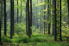 spring in the forest (JoannaRB2009) Tags: nature las forest woods green leaves foliage light gałkówek landscape view