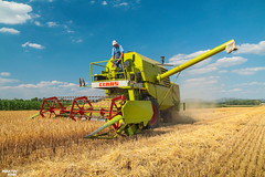 Spring Barley Harvest 2018 in Austria   CLAAS (martin_king.photo) Tags: harvest harvest2018 ernte 2018harvestseason springbarley barley grain austria österreich claas vintage claasmercator75 claasmercator combineharvester combine harvester old oldmachine man summerwork powerfull martin king photo machines strong agricultural greatday great czechrepublic welovefarming agriculturalmachinery farm workday working modernagriculture landwirtschaft martinkingphoto moisson machine machinery field huge big sky agriculture tschechische republik power dynastyphotography lukaskralphotocz day fans work place clouds blue yellow gold golden eos country lens rural camera outdoors outdoor