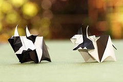 Cow (Tsuruta Yoshimasa) (De Rode Olifant - taking a break) Tags: tsurutayoshimasa origami marjansmeijsters paper paperfolding cow origamicow tanteidan 3d tanteidanmagazine158 cof031mari cof031ally cof031meu cof031chri cof031hole cof031ettigirbs papiroflexia