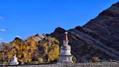 Leh Valley Landscape (pallab seth) Tags: landscape leh hemis gompa chorten prayer ritual nature autumn ladakh jammuandkashmir india