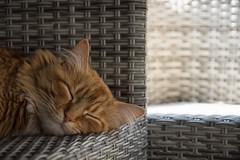 Seeking Shade (JDWCurtis) Tags: shade summer cat feline felinephotography seat seats sun sleep rest sleeping resting cardiff wales southwales pet petphotography animal pussycat whiskers ears smile