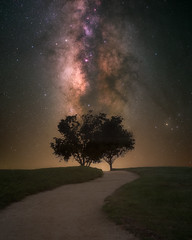 Milky Tree Path (RyanLunaPhotography) Tags: california fuji fujifilm socal southerncalifornia xt2 astrophotography landscape milkyway night