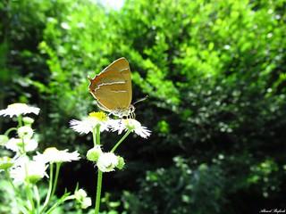 Butterfly 1706