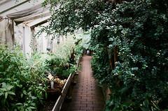 Copenhagen Botanical Garden (Bazzerio) Tags: 35mm bazzerio analogue travel adventure garden green leaves plants grow gain grainy analog fujifilm copenhagen botanical vintage