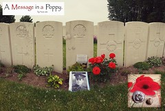 (A message in a Poppy) Tags: poppy inflandersfields tynecot 1418 19141918 flandersfields thegreatwar lestweforget lestweforget🌹 rememberenceday ww1 wwone ieper ypres flandersfieldmuseum monuments wewillrememberthem firstworldwar cwgc passchendaele100 theroyalbritishlegion artist poppyappeal meningate worldwarone passchendale100 royalbritishlegion passchendale poppies australianimperialforce message