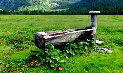 Acqua di sorgente - Spring water (Raffa2112) Tags: parcoalpeveglia naturalpark verde fonte legno acqua green wood water fresh canonpowershotsx710hs raffa2112
