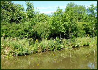 Summer along the canal bank.