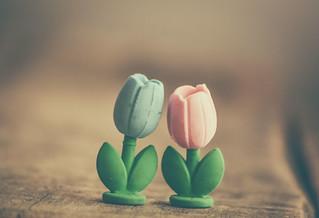 tulips ... erasers