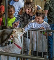 Ahhh...More, More, More... (Wes Iversen) Tags: davisburg michigan nikkor18300mm oaklandcountyfair farmanimals fences kids livestock mammals people women animals goats s