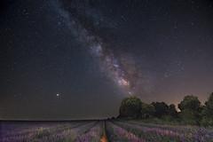 VL Lavanda, Brihuega. (jetepe72) Tags: lavanda brihuega nocturna via lactea vl