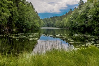 Tranquil Forest Pond