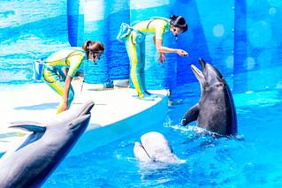 Girls with Dolphins at the Dolphins and Sea Lions Show of Enoshima Aquarium, Fujisawa : イルカとアシカのショーにて(藤沢市・新江ノ島水族館)