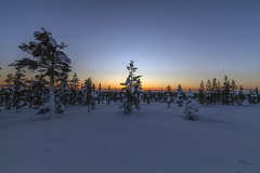 Evening (Joost10000) Tags: tree trees forest snow winter ice cold lapland suomi wood sunset sky mountainside wild wilderness scenic beauty landscape landschaft outdoors natur nature saariselka canon canon5d