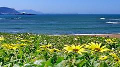 Arrigunaga 15:00 (eitb.eus) Tags: eitbcom 2068 g134685 tiemponaturaleza tiempon2018 primavera bizkaia getxo carlosmerino
