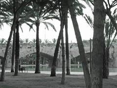 (sftrajan) Tags: jardíndelturia valencia spain riutúria park parque españa puentedelmar pontdelamar bridge palmerar palmera palmier bw espanya puente jardídetúria 16thcentury espanha espagne