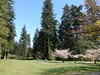 Anyone for golf? (D70) Tags: anyone golf centralpark burnaby bc canada cherry blossoms pitchputt second growth forest dominated douglas fir western hemlock red cedar sony dscrx100m5 ƒ56 88mm 1200 125