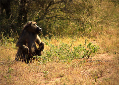 Parque Nacional Kruger (BarbaraCiminari) Tags: sudáfrica sudafrica kruger nationalpark natu nature naturaleza animals animales animal