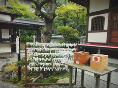 paper wishes in Kamakura (Ola 竜) Tags: kamakura shrine temple japan japanese paper wishes tanabata green tree table urbannature wooden boxes walls windows zen garden divine atmosphere composition fz200 stones shinto omikuji fortunetelling
