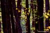 Abendlicht (grafenhans) Tags: sony alpha 68 alpha68 a68 slt tamron 4056 70300 usd wald baumstamm baum laub licht gegenlicht frühling frühjahr grafenwald bottrop nrw