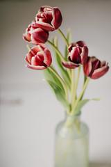 ziua lui matei 2 ani (4 of 167) (h o t a r u) Tags: stilllife 135mm flowers soft naturallight windowlight