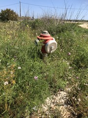 Rescue Me - Overgrown Fire Hydrant (firehouse.ie) Tags: fd portugal algarve pillarhydrant firehydrant pompiers straz feuerwehr bomberos bombeiros hydrants hydrant dept department brigade fire