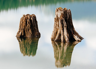 From Seedlings To Stumps