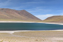 Laguna Miñiques, Chile (Luís Biggi) Tags: lagunamiscanti lagunamiñiques lake reservanacionallosflamencos vicunha vulcán volcano chile deserto atacama andes nikon nikond7500 nikonafs16~35mmf4gedvr noprocessing