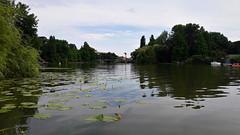 Nyári délután a Körös-holtágnál (Szarvas) (milankalman) Tags: water lake river landscape summer nature