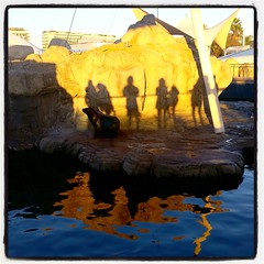 sunlight shadows (Maluni) Tags: valencia espana spagna spain acquario acquarium water acqua sea mare ombre shadows tramonto sunset