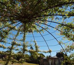 2018_06_0581 (petermit2) Tags: playground greyworld pergola aviary rose roses yorkshiresculpturepark ysp westbretton wakefield westyorkshire yorkshire