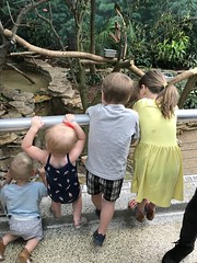 "Cousins at Brookfield Zoo • <a style=""font-size:0.8em;"" href=""http://www.flickr.com/photos/109120354@N07/41741102710/"" target=""_blank"">View on Flickr</a>"