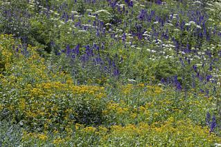 Lush Alpine Meadow