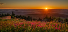 Sunrise on saxony's rooftop - Sonnenaufgang auf dem Dach von Sachsen (ralfkai41) Tags: wood sunrise landschaft sonne mountains berge outdoor wald natur bäume woodlands landscape sun sachsen saxony forest flowers trees sonnenaufgang oremountains nature erzgebirge fichtelberg blumen