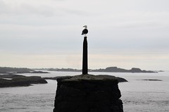 """ ut mot havet ""...... (KvikneFoto) Tags: bird fugl landskap natur norge møreog romsdal atlanterhavet ocean kyst coast tamron nikon"