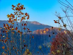 North Carolina Mountains (Shawn Blanchard) Tags: fall autumn trees leaves changing colors yellow orange red green blue sky north carolina nc mountain wood