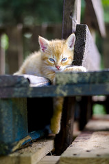 Relax (markokovacevic4) Tags: animals babies pets cat muca relaxing garfi afternoon rest