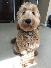 Ginger's handsome boy Zero!