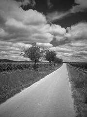 Auf dem Feld (TitusT1960) Tags: derweg feld wein landscape landschaft bw weinstrase weinberg