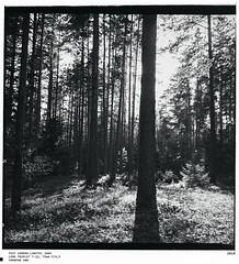 Lubitel 166V middle format (6x6) (ibryuzgin) Tags: lubitel166v triplett22 75mm middle format 6x6 foma famapan200 fomafix fomadon tastcamera советскоестекло советскиеобъективы мануальныеобъективы captureone sometimes sometimesphoto photographer film landscape smolensk смоленск